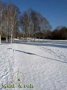 Exkursion Bäume und Sträucher im Winter @ Sindelfingen