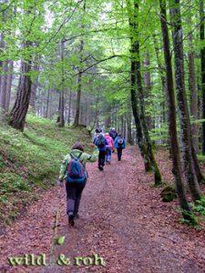 Exkursion Bäume und Sträucher im Sommer @ Sindelfingen