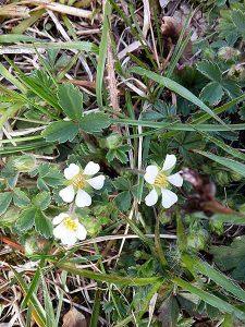 Exkursion Essbare Wildpflanzen im Frühjahr @ Sindelfingen