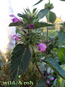 """Exkursion """"Essbare Wildpflanzen im Sommer"""" @ Sindelfingen"""