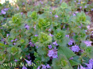 Familien-Exkursionen Essbare Wildpflanzen im Frühjahr entdecken @ Sindelfingen